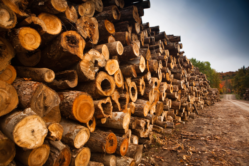 GCED Target Industry - Forestry